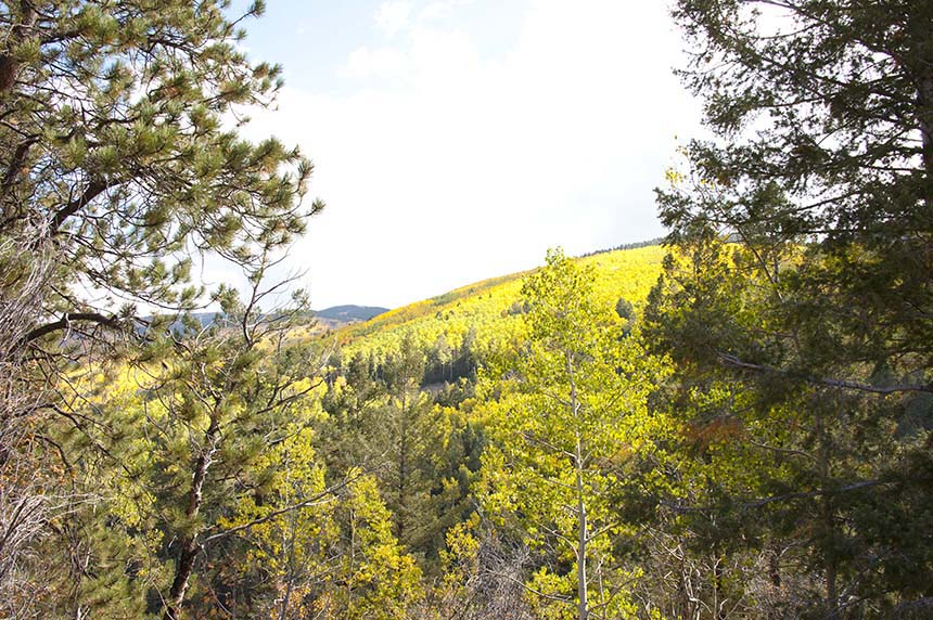 Fall aspens in Santa Fe
