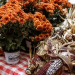 Fall flowers and dried corn