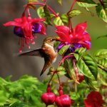 Hummingbirds are Warrior Birds